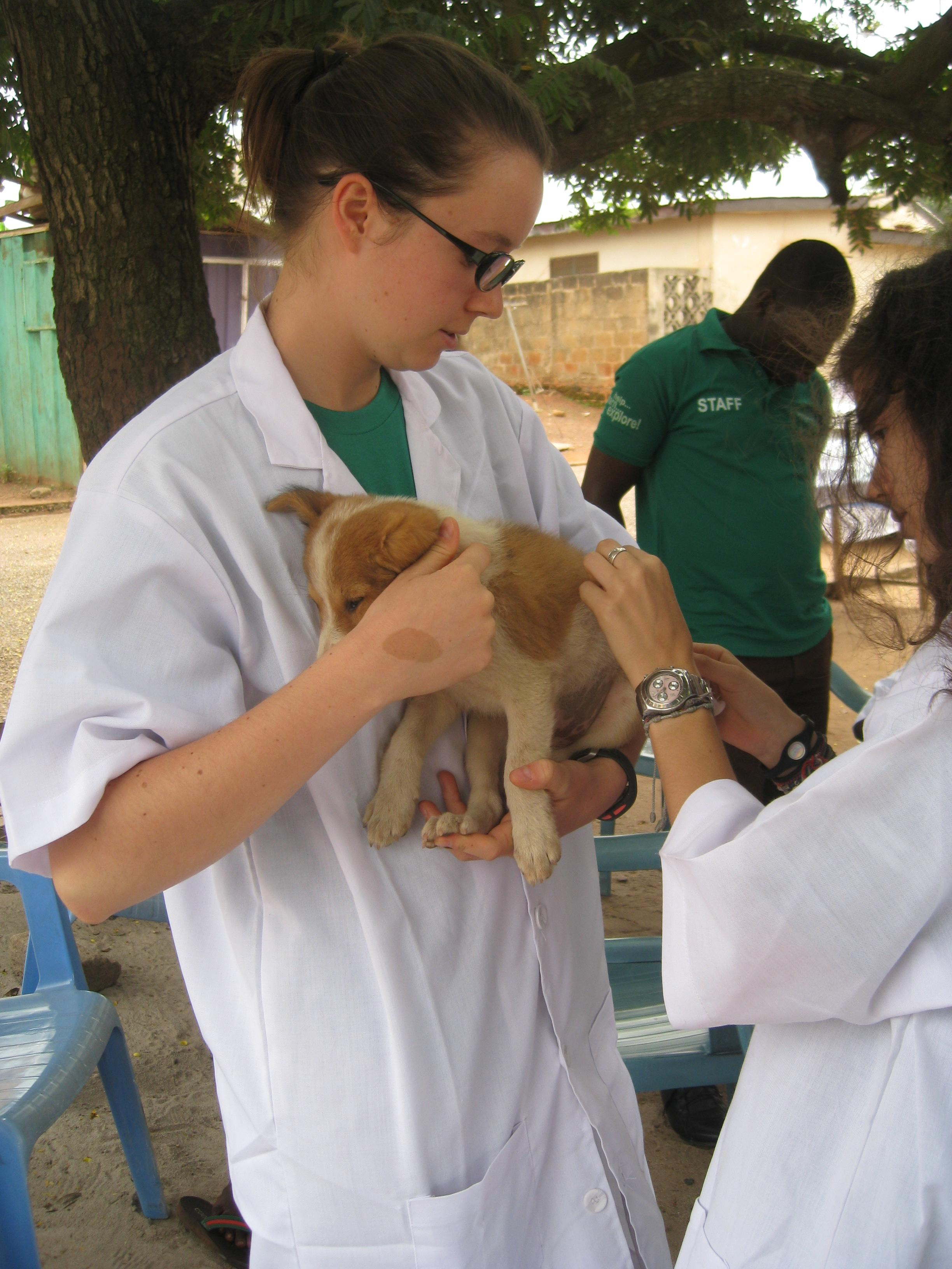 Projects Abroad volunteer holding a puppy while he gets his injections at our Veterinary Medicine placement in Ghana.